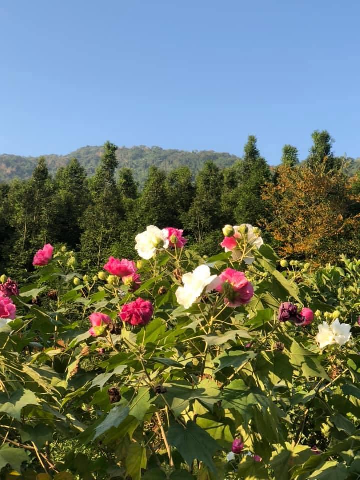 Trang trại 10.000m2 đầy sắc xuân của vợ chồng ca sĩ Việt Hoàn