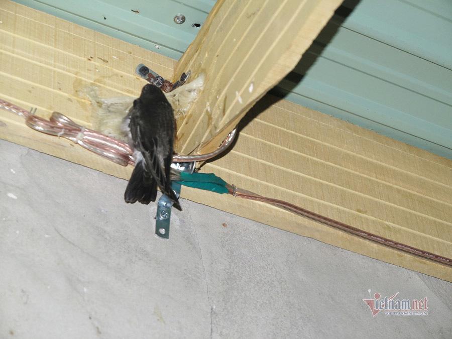 Lộc trời từ 6 con yến, làng Bình Dương bỏ tiền tỷ xây nhà dụ chim về ở