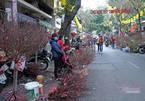 A week before Tet, flower market in Hanoi Old Quarter still quiet