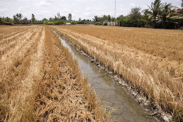 Water shortages, climate change linked to saline intrusion in Mekong Delta