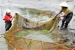 Nông dân làng cá chép đỏ Thủy Trầm 'đứng ngồi không yên' vì Covid-19