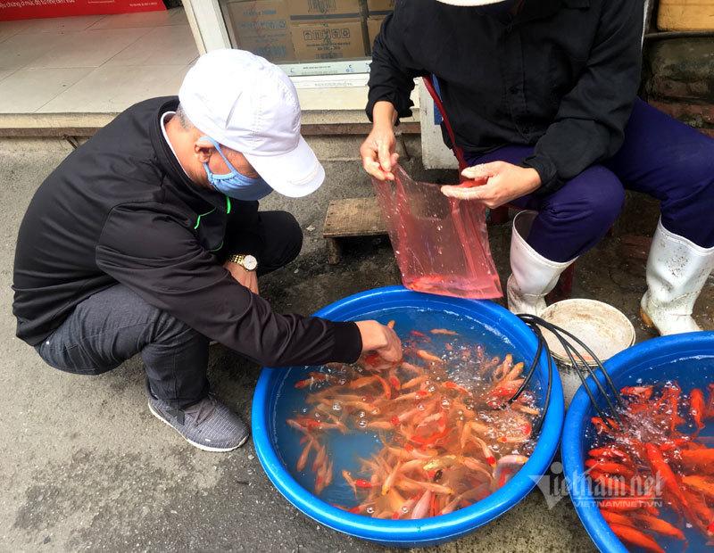 Cúng ông Công ông Táo: Chỉ 1 buổi sáng, cá chép đỏ tăng giá gấp 4 lần