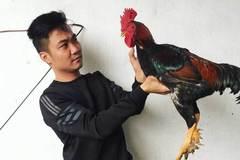 Raising 9-spur cocks, farmer earns big money