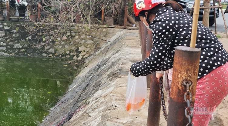 Người Hà Nội trèo tường, vượt rào... ném cá chép đỏ phóng sinh ngày tết ông Táo