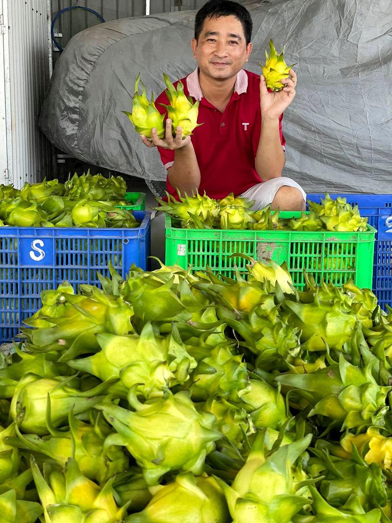 Ngồi một chỗ, ngày bán 2 tấn thanh long vàng: Hàng ngoại ế nặng, đồ Việt cháy sạp