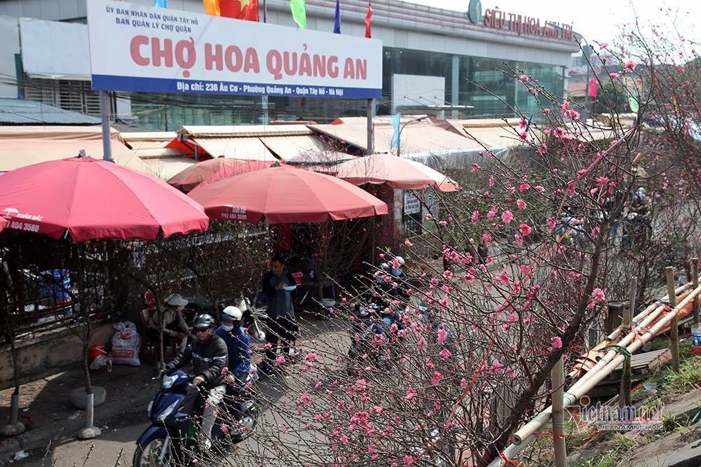 Các chợ đào Tết tại Hà Nội, giá hạ nhưng mới chỉ nhộn nhịp người bán