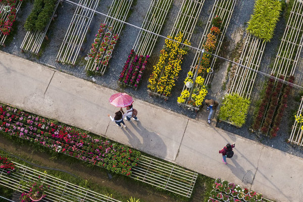Làng hoa lớn nhất miền Tây vắng chưa từng thấy ngày giáp Tết