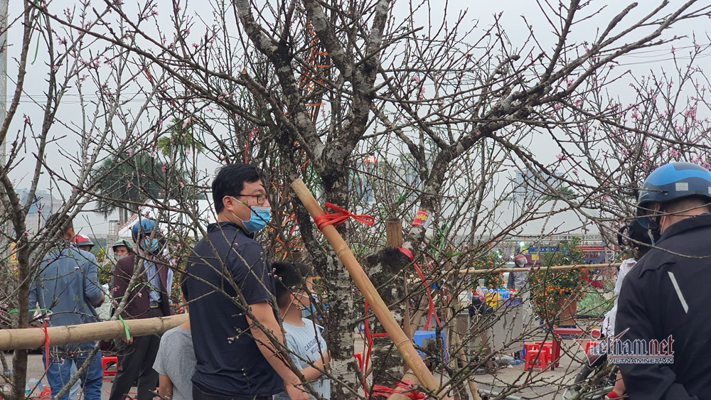 Chợ chiều 27 Tết: Đào bung, quất héo khắp nơi báo ế