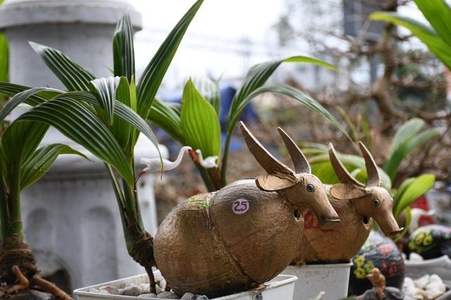 Độc lạ chơi Tết: dừa 'hoa sen', bonsai dừa trâu độc lạ