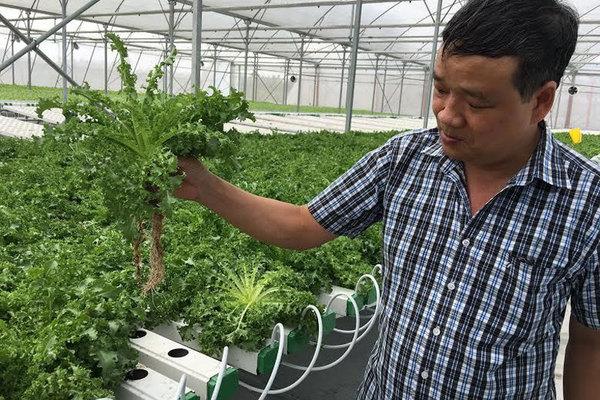 Trồng cà chua bằng smartphone, ngồi trên đỉnh núi bán rau sang Mỹ