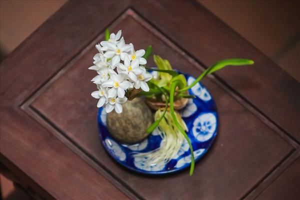 Thú chơi loài hoa 'chén ngọc đĩa ngà' của người Hà Nội dịp Tết