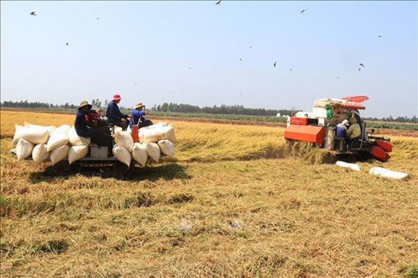 Mekong Delta,climate change