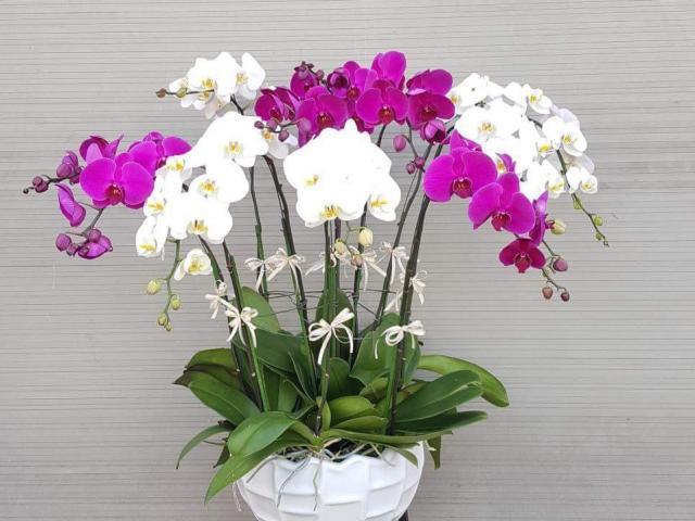 Phong thuỷ bất ngờ những loại hoa quen thuộc người Việt bày trong nhà ngày Tết