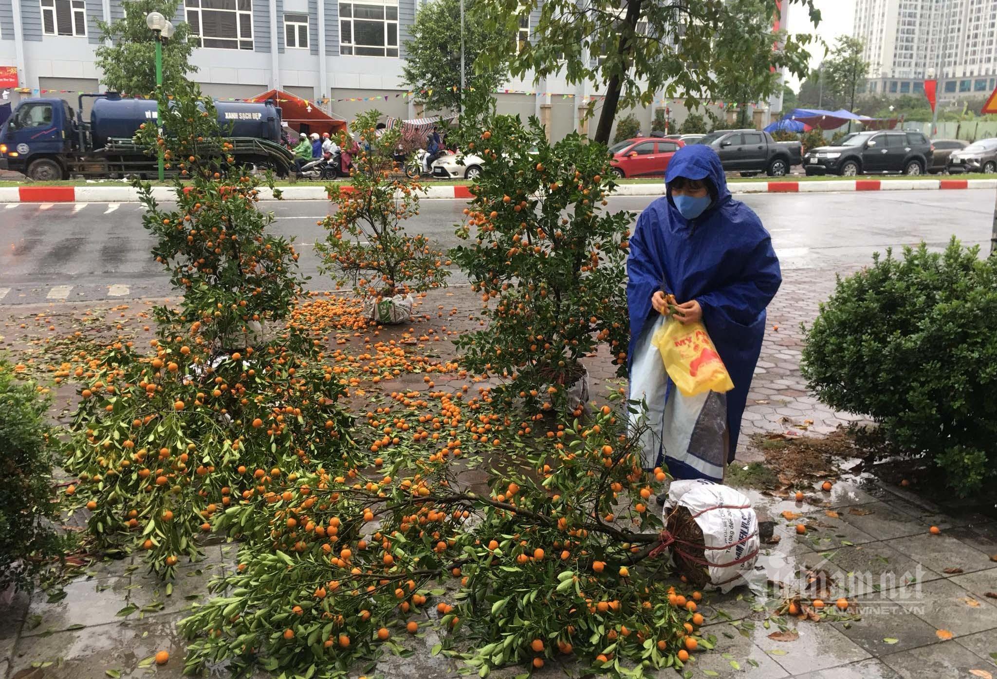 Tai họa ập tới, người đàn ông đau xót đập phá gần 100 cây quất