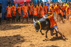 Những lễ hội 'độc, lạ' về trâu bò trên thế giới