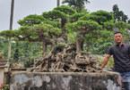 Mãn nhãn siêu cây triệu đô của nghệ nhân tiêu biểu Đông Nam Á