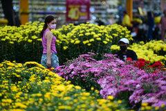 TP.HCM ngày cận Tết: Hoa rực sắc màu, giá giảm sâu, người mua thưa vắng