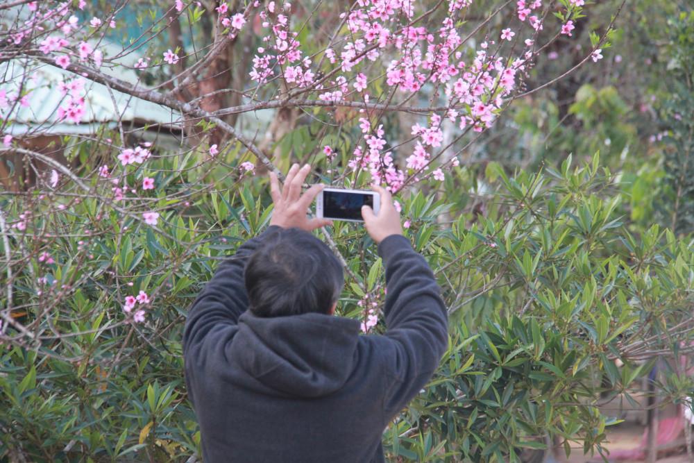 Quảng Nam: Làng mai rừng màu hồng rực rỡ nơi biên giới