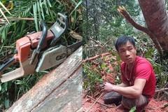 Người đàn ông vào rừng cưa hàng loạt cây gỗ bị công an bắt quả tang