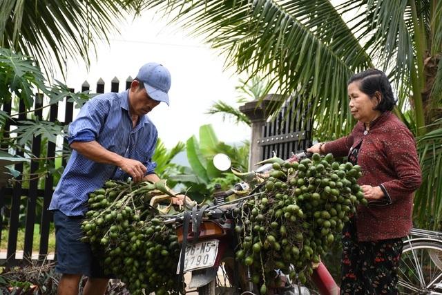 Cau Tết tăng giá 'chóng mặt', nông dân kiếm tiền triệu mỗi ngày