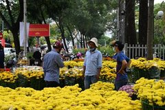 Many beautiful flowers available for decoration during Tet