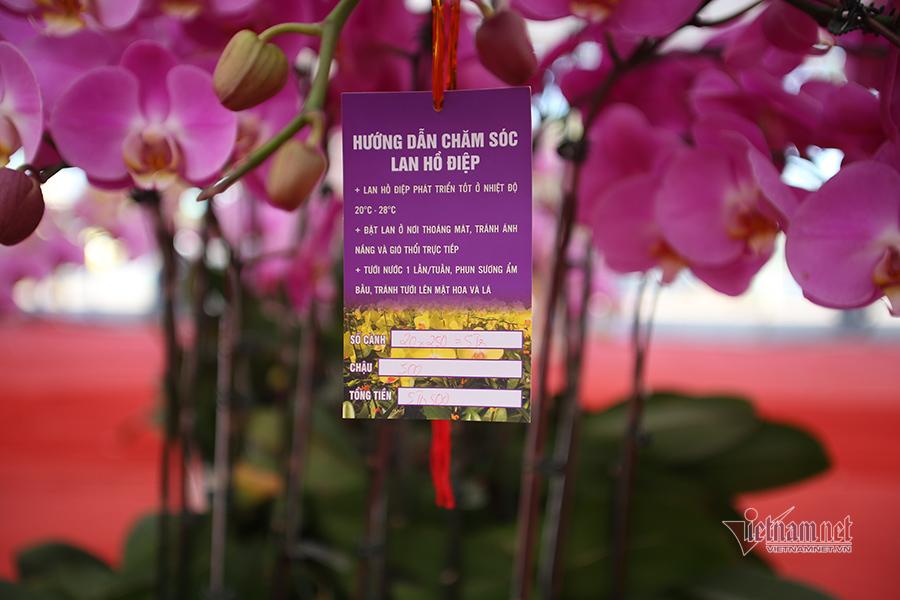 Chợ hoa 'nhà giàu' Hà Nội chiều 30 Tết: Giá nào cũng bán
