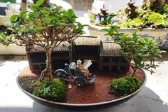 Người đàn ông Nha Trang sở hữu hàng nghìn bonsai, tiểu cảnh mini