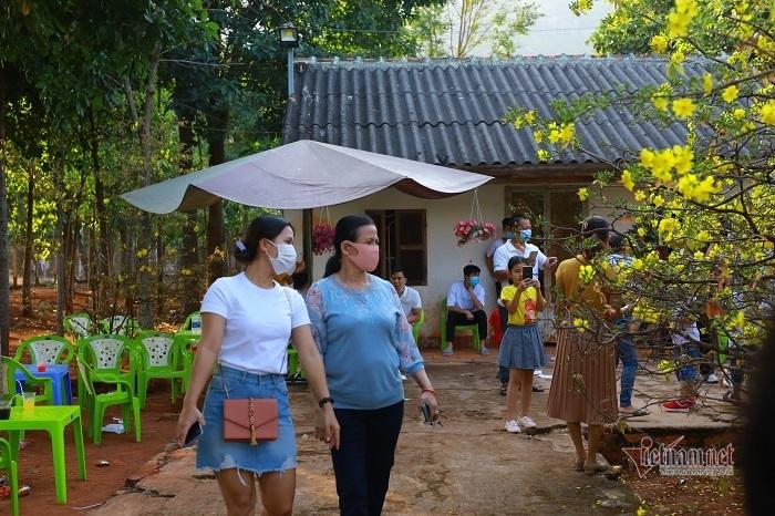 Khách nườm nượp đổ về chiêm ngưỡng cây mai cao 5 mét ở Đồng Nai