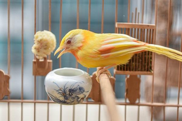 Tay cầm tiền tỷ, đại gia cũng không mua nổi chim ngũ sắc độc nhất Việt Nam