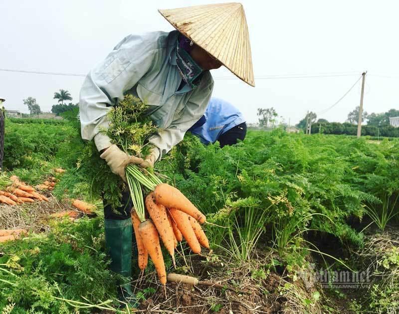 100,000 tons of farm produce stuck in Hai Duong Covid-19 hotspot