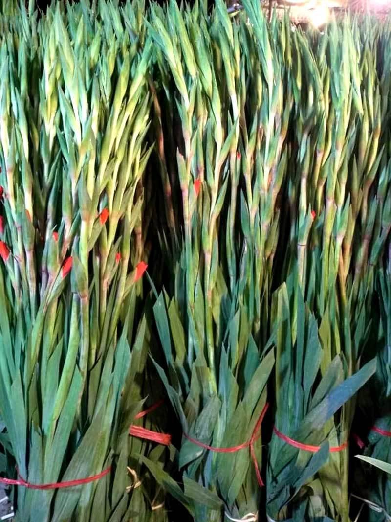 Hoa tươi giá rẻ như rau, chị em rủ nhau 'giải cứu' cho dân làng