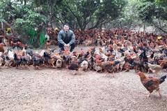 700 ngàn con gà cần bán ngay, dân Hải Dương lo âu từng ngày
