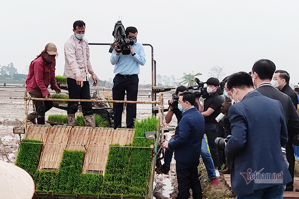 Bí thư, Chủ tịch Hà Nội xuống đồng đi cấy cùng nông dân