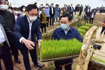 Hanoi's Party Chief, Chairman join local farmers on their fields