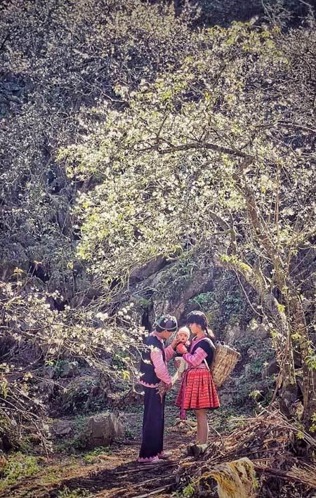 Fairy-like destinations in Moc Chau