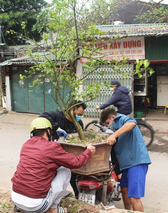 Chán mua hoa bưởi theo cân, dân Hà thành vung tiền lấy cả cây lẫn chậu