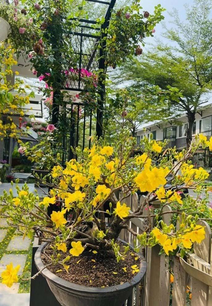 Vườn nhà rộng 420 m2 ngập sắc hoa của Nhật Kim Anh