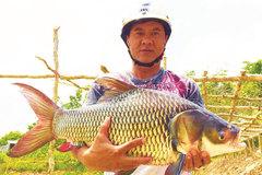 Xóm lặn 'độc nhất' miền Tây, bắt cá hô 'khủng' 200 kg