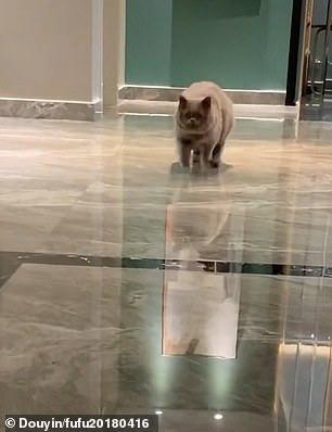 Chú mèo khóc nhớ chủ trước camera an ninh gây bão mạng xã hội