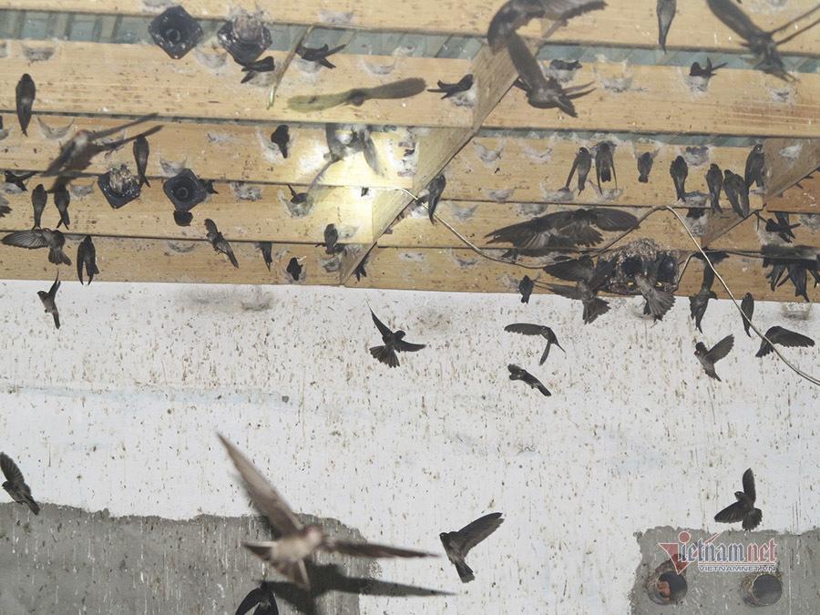Xây nhà cho chim ở, vợ chồng Bình Dương thu tiền tỷ