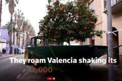 Xem rung cây hái quả công nghệ cao ở Tây Ban Nha