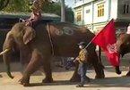 Cưỡi voi biểu tình ở Myanmar