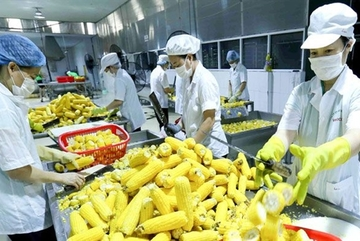 RCEP offers opportunity to expand Vietnamese agricultural exports