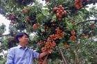 Chuyện đại gia chân đất: Nuôi gà thu 1.500 tỷ, bán trái cây gom 8.000 tỷ