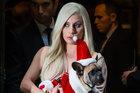 Lady Gaga treo thưởng 12 tỷ để tìm lại hai chú chó bị trộm