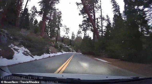Cây cao 60m bất ngờ đổ ập xuống ô tô, cặp đôi hú vía thoát chết trong gang tấc