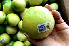 Northwest region: passion fruit brings high profit