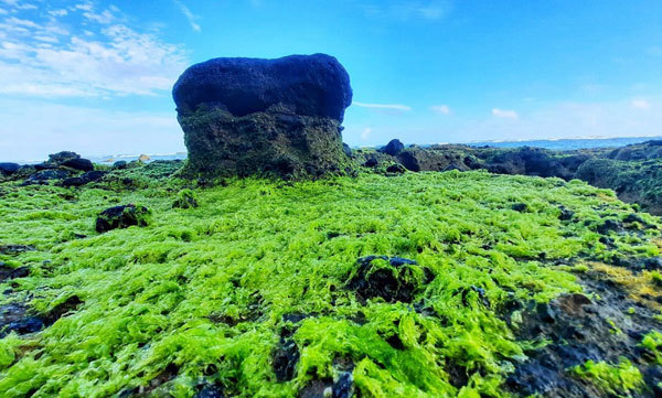 Heavenly scenery of green moss in Ly Son Island