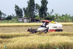 Mekong Delta farmers get bumper harvest, high prices for winter-spring rice