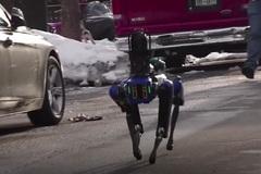 Chó robot nghiệp vụ ở Mỹ